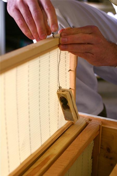 installing-bee-package-8