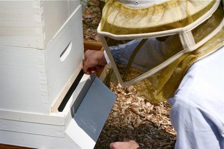 opening-the-hive-door