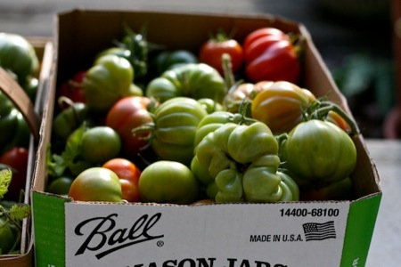 Box_of_green_tomatoes