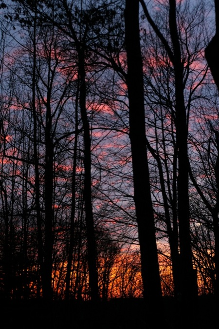 sunset_tree_sihlouette