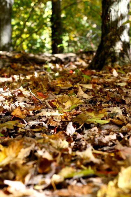 fallen_leaves