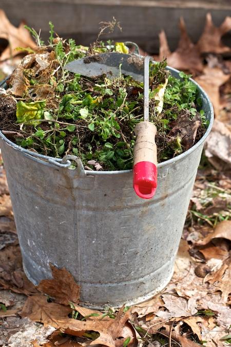 bucket_of_weeds