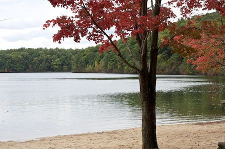 walden pond 2