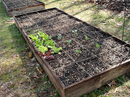 first raised bed in the garden