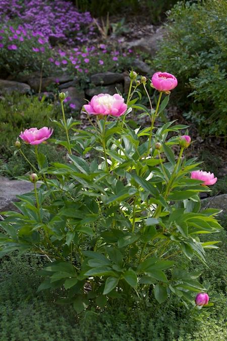 Front Hillside Garden 8