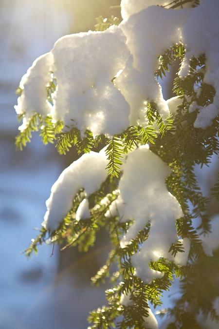 Sun and snow 4