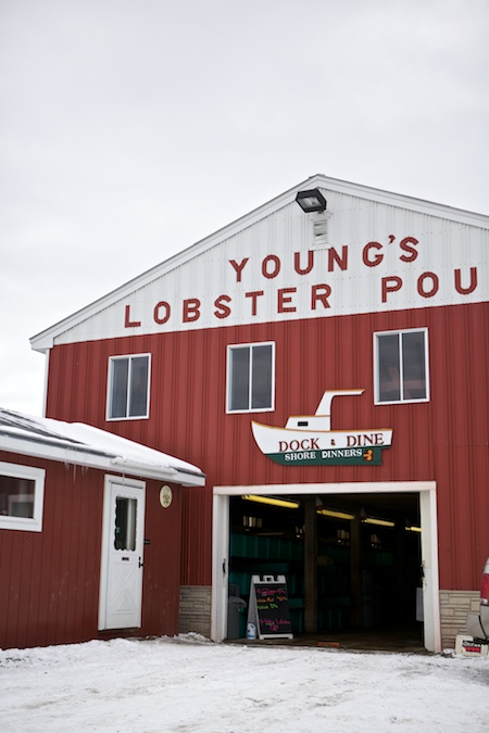 Young Lobster Pound 2