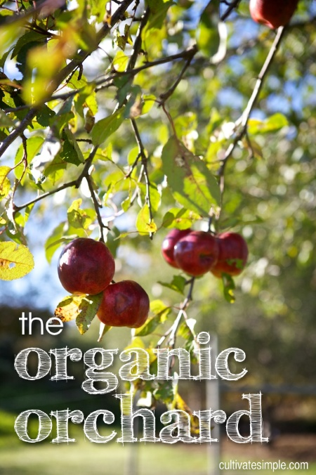 the organic orchard
