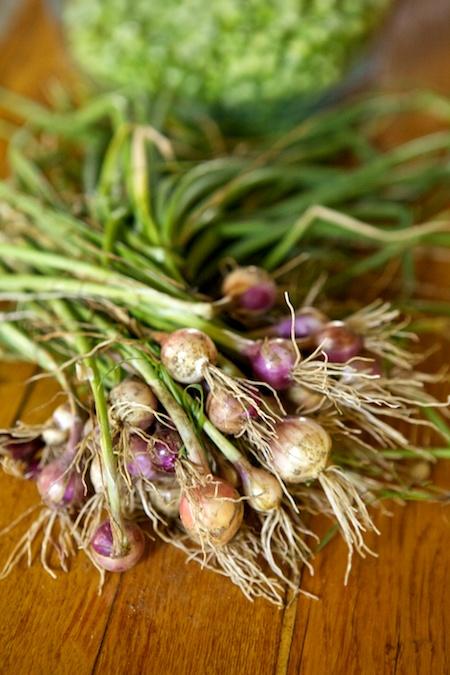 fresh onions 2
