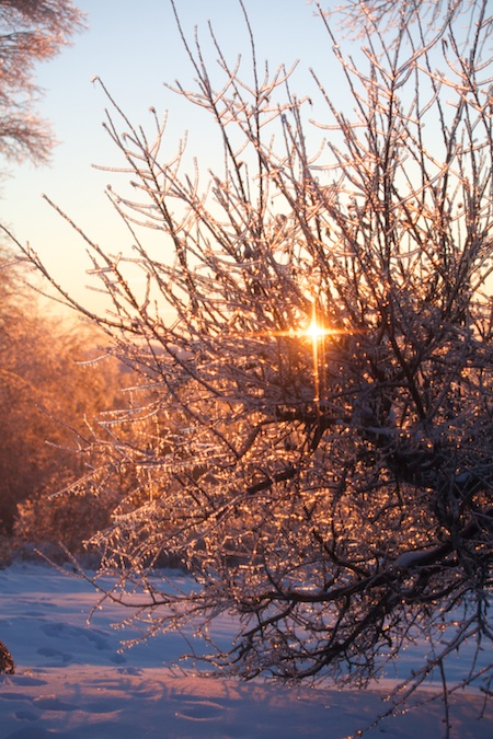 Sunny winter morning 3
