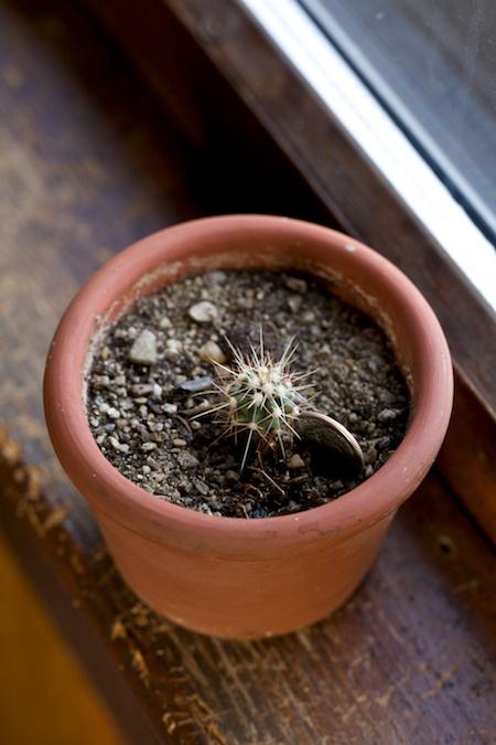 tiny cactus 1