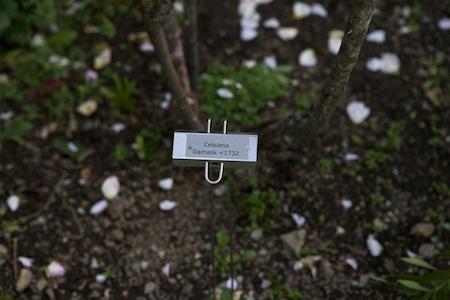 plant labels 5
