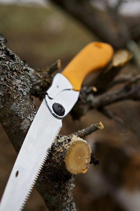 pruning saw 3