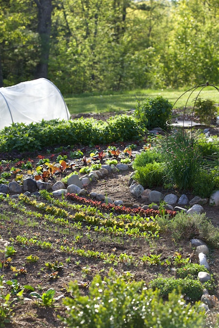 Potager with curved rows 3