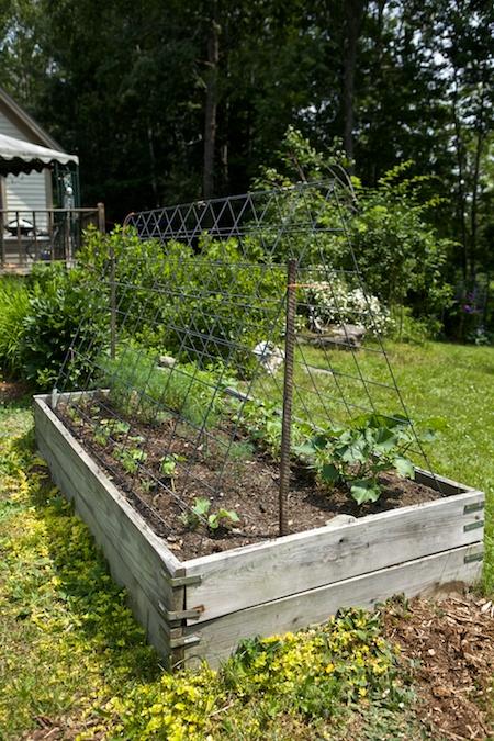 belfast garden tour 9