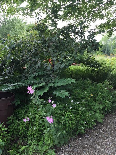 hidden gardens 1
