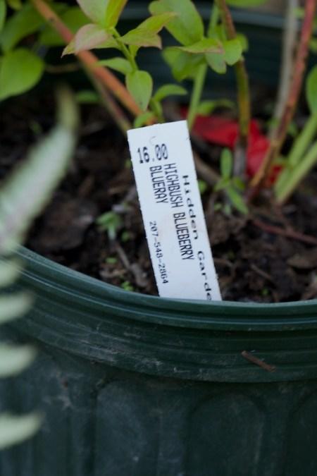 new plants from hidden gardens 6