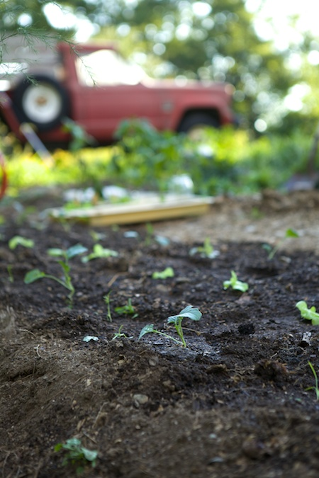 planting fall crops 1