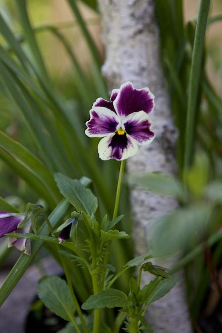 spring cassis 1