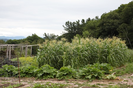 shelburne farms edible gardens 13