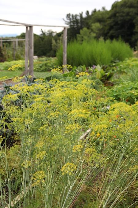 shelburne farms edible gardens 16