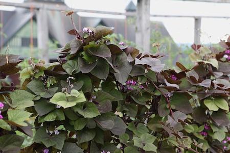 shelburne farms edible gardens 6