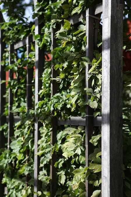 lacko-slatt-walled-lower-garden-2