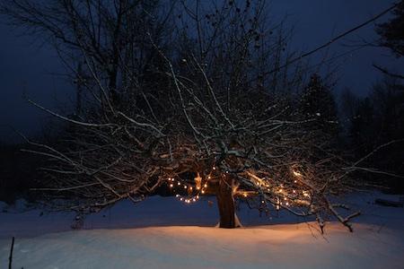 lights-on-apple-tree-1