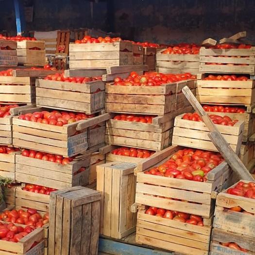 tomates bolivianos en cajas
