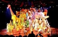 Disneyland Hong Kong Festival of the Lion King Videos