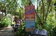Disney's Animal Kingdom Park-Stellar Entertainment for Your Walt Disney World Trip