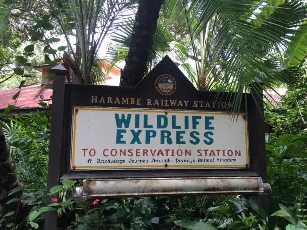 Top Mid-Day Break Spots at Disney's Animal Kingdom