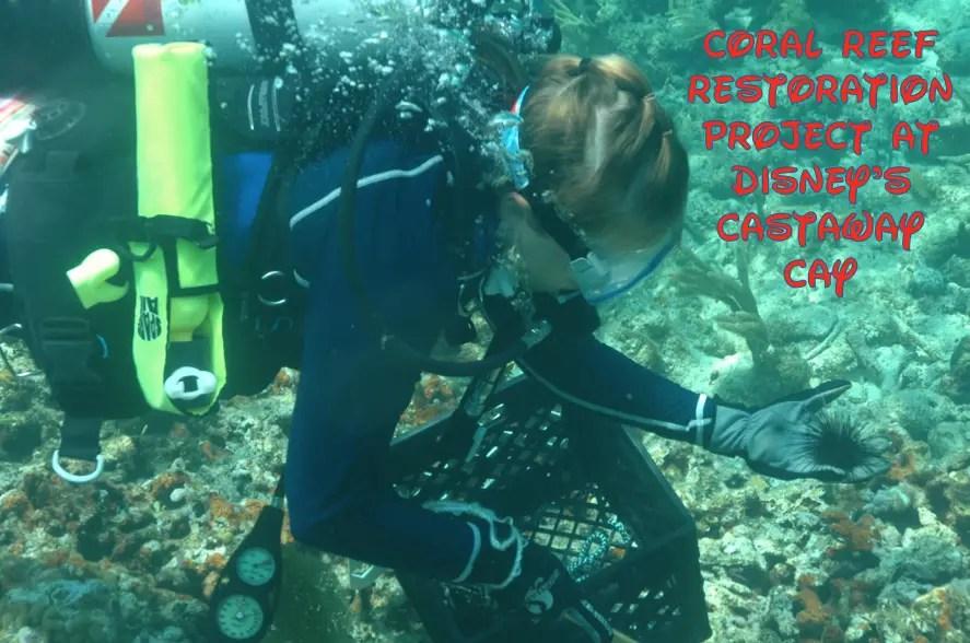 Coral Reef Restoration Project Underway at Disney's Castaway Cay