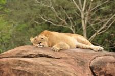 Wild Africa Trek 140