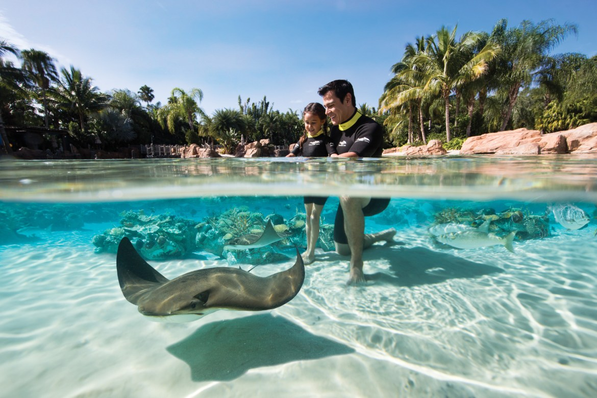Discovery Cove offering $100 off for Florida Residents