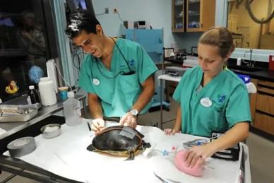 Vet Hospital Animal Kingdom
