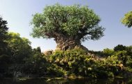 A Look Back At 20 Years of Amazing Animal Kingdom Milestones