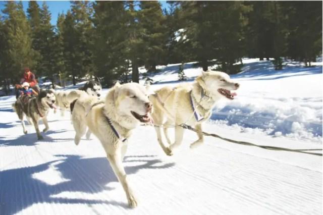 Dog Sledding on Adventures by Disney Wyoming