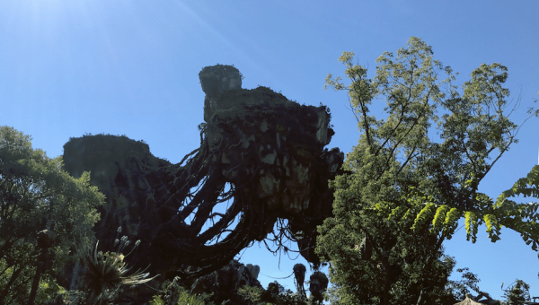 Animal Kingdom Reducing Hours For Attractions Within the Park