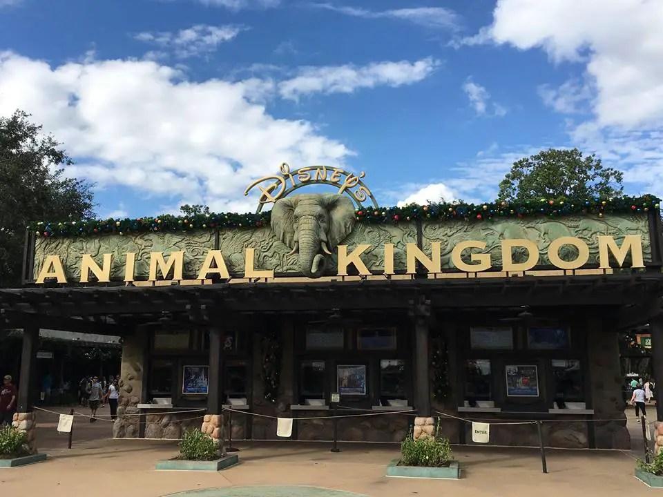 Christmas has come to Disney's Animal Kingdom