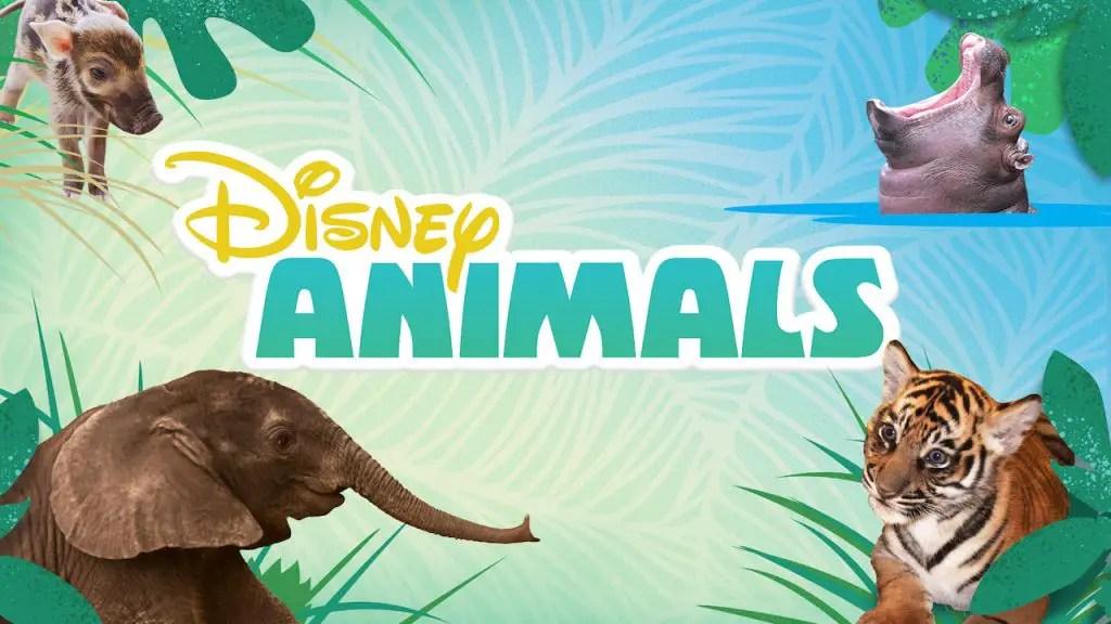 New Disney Animal Videos Featured on the DisneyNOW App