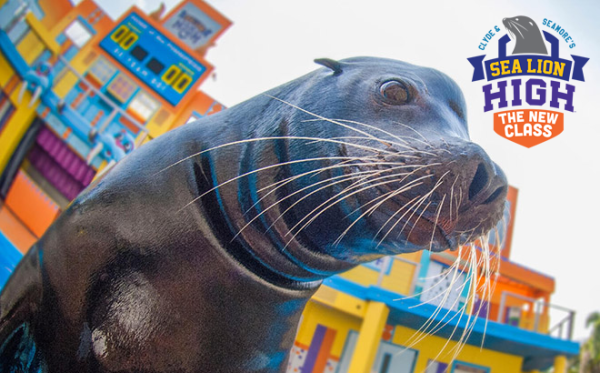 New Sea Lion High Show Headed to SeaWorld Orlando 1