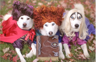 Adorable Dogs Dress Like Sanderson Sisters from