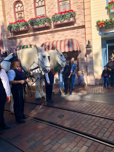 Two of Disneyland's Beloved Horses Are Now Retired Cast Members 2