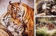 Disney Now App Bringing the Animal Kingdom Animals into Your Home