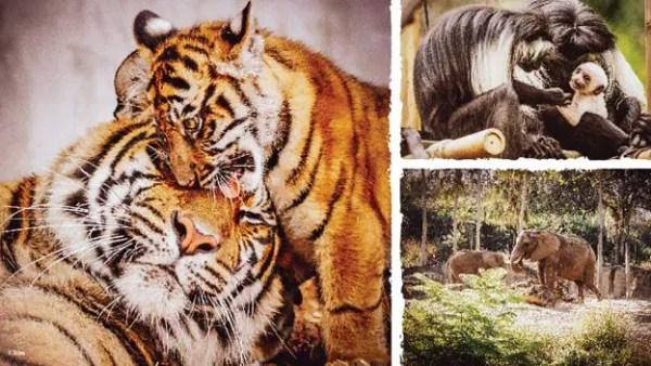Disney Now App Bringing the Animal Kingdom Animals into Your Home 1