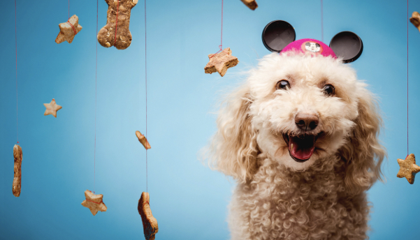 Make Delicious Dog Treats at Home with Recipes from Disney Chefs 1