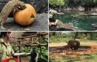 Disney's Animal Care Team Earns Prestigious AZA Accreditation