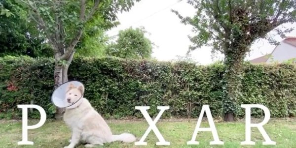 Adorable Dog With Cone Of Shame Wants To Work At Pixar pixar puppy