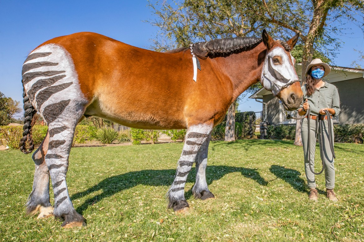 Have some Halloween fun with the Horses at Disney's Circle D Ranch